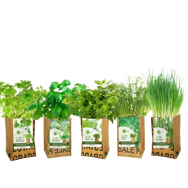 5 kweektuintjes met verschillende verse kruiden van superwaste