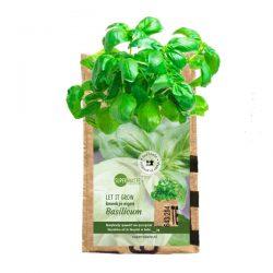 een kweekzakje gemaakt van geupcyclede theezakken uit india met basililcum om zelf te kweken van het fairtrade merk Superwaste