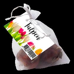 bedank cadeautje Tulpen weggevertje de 3 tulpenbollen zitten in een wit organza zakje