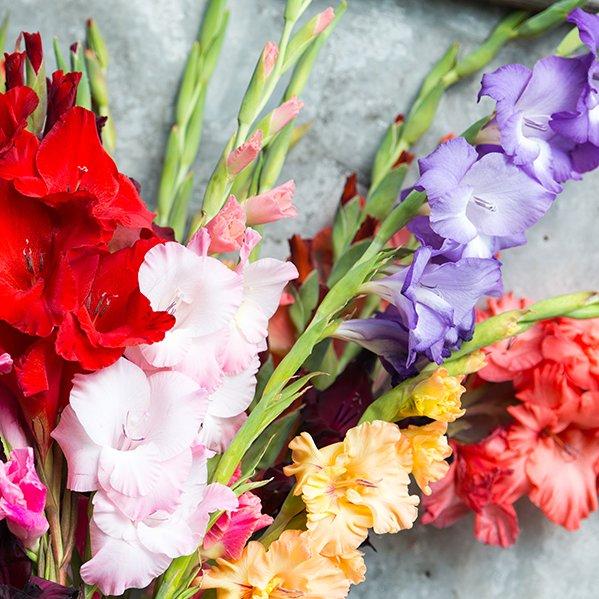 gladiolen uit paasgeschenk in volle bloei