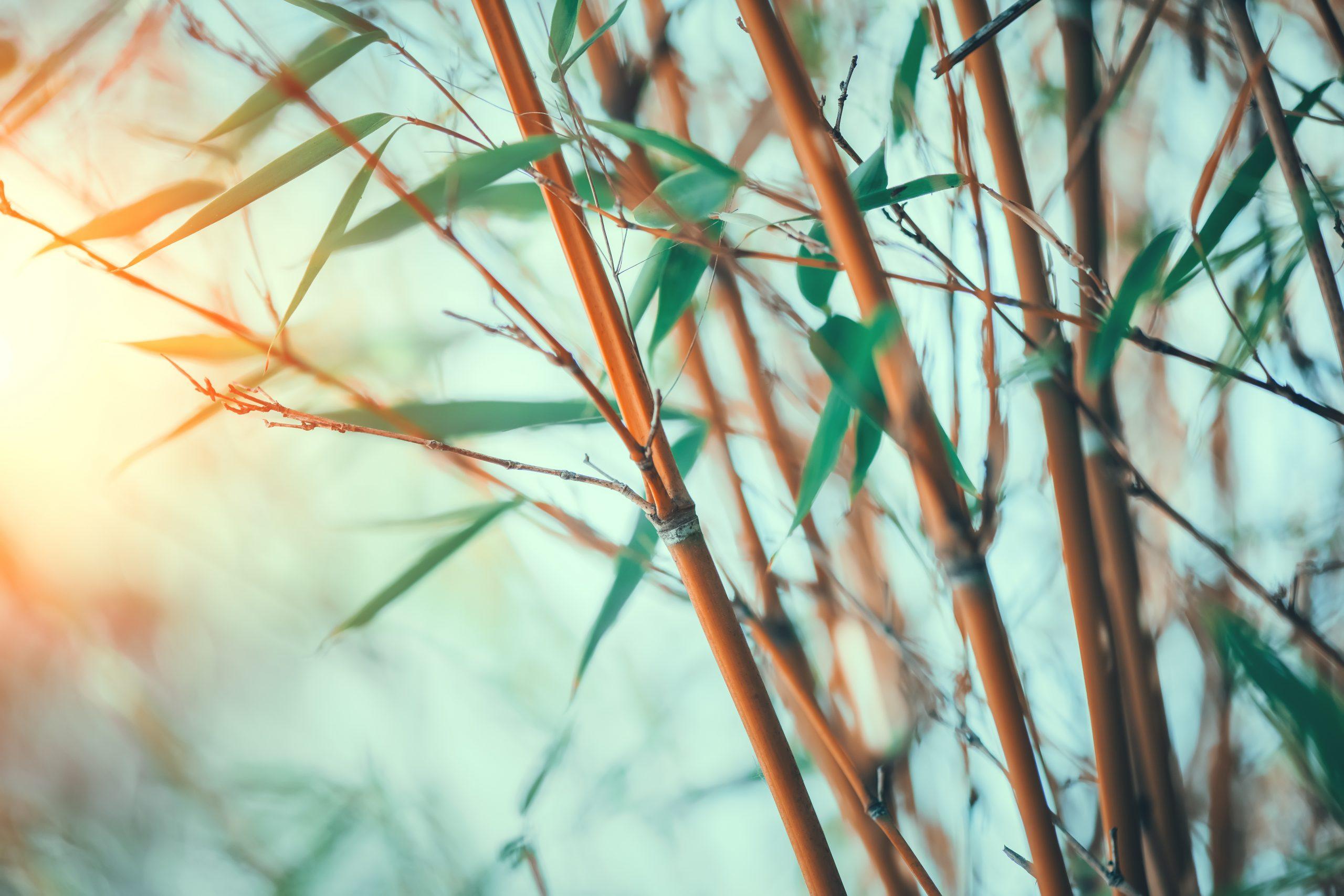 sfeerfoto bamboe wat wordt gebruikt voor duurzaam cadeaupakket